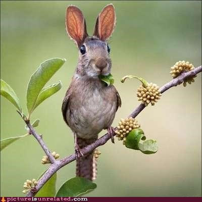 The Rare Harebird