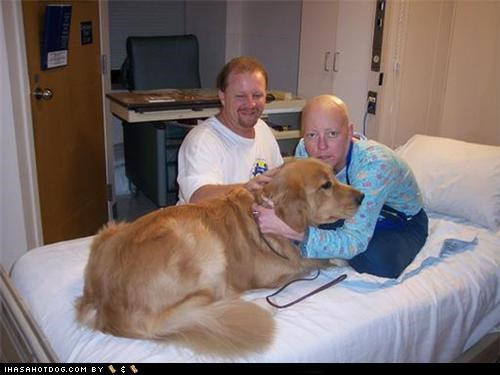 Goggie ob teh Week- Therapy Dogs: Just a Quick Visit