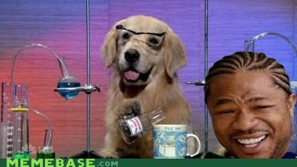 animemes,dogs,golden,labs,retreiver,yo dawg