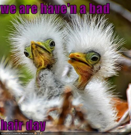 we are have'n a bad   hair day