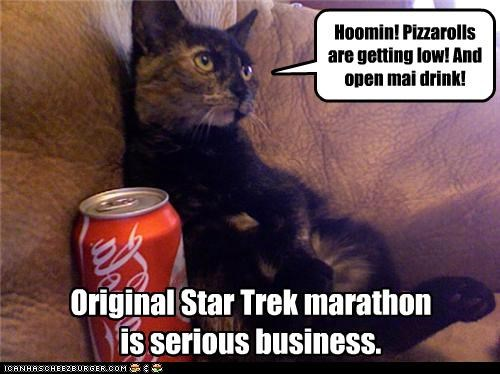 business,caption,captioned,cat,demanding,demands,drink,human,marathon,noms,original,serious,show,Star Trek,television,TV,watching