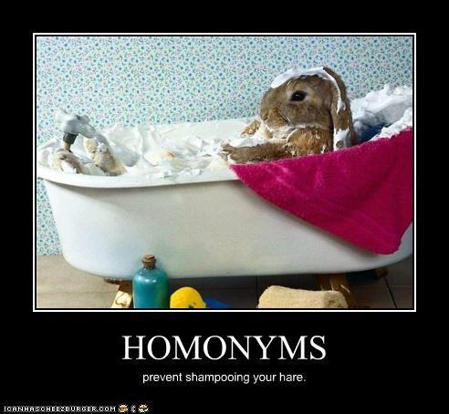 animals,bath,bathing,bunnies,hair,hare,homonyms,homophones,I Can Has Cheezburger,shampoo,word play