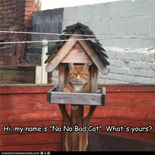 "Hi, my name's ""No No Bad Cat"". What's yours?"