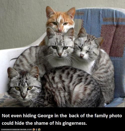 animals,Cats,family photos,gingers,I Can Has Cheezburger,shame