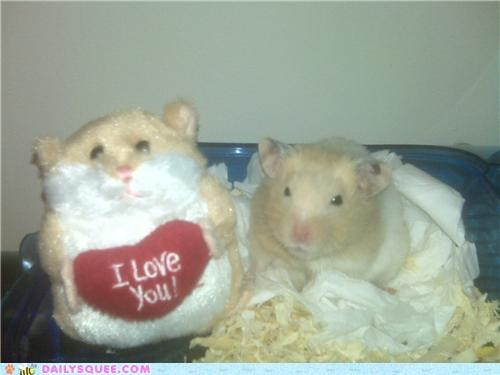 friend,friends,hamster,hamsters,reader squees,resemblance,stuffed animal,TLL,toy,twin