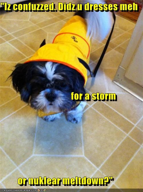 """Iz confuzzed. Didz u dresses meh for a storm or nuklear meltdown?"""