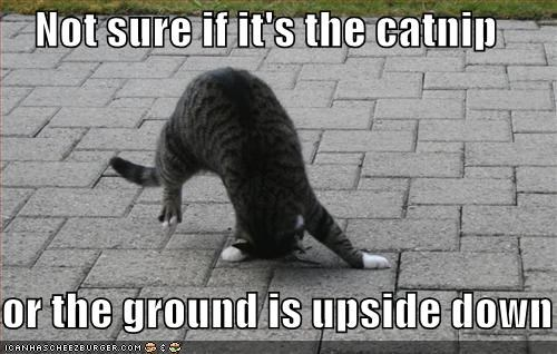 Not sure if it's the catnip  or the ground is upside down