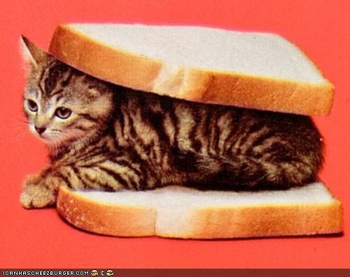 Cyoot Kitteh of teh Day: Iz in Ur Bred, Bein' a Sammich