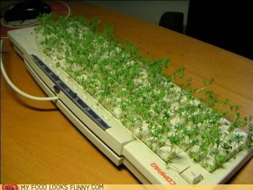computer,dirty,disgusting,greens,keyboard,sprouts