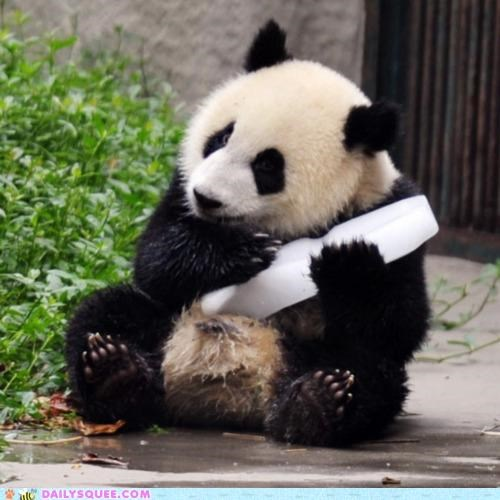 acting like animals,block,cold,cooling off,cuddling,ice,nice,panda,panda bear,rhyming