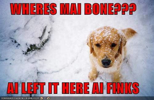 WHERES MAI BONE???  AI LEFT IT HERE AI FINKS