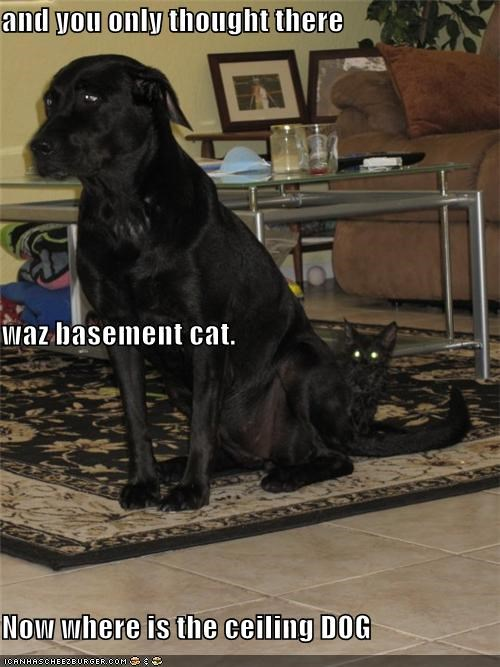 and you only thought there   waz basement cat. Now where is the ceiling DOG