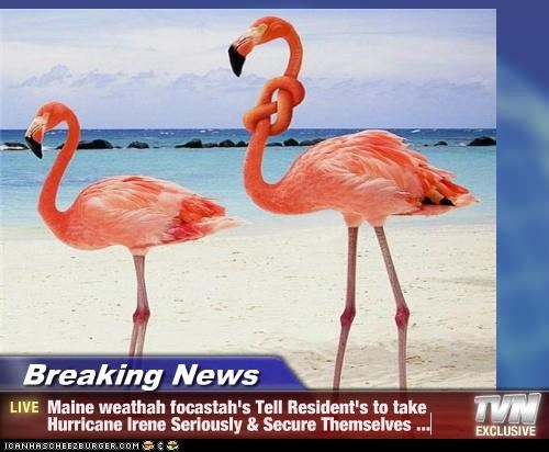 Breaking News - Maine weathah focastah's Tell Resident's to take Hurricane Irene Seriously & Secure Themselves ...