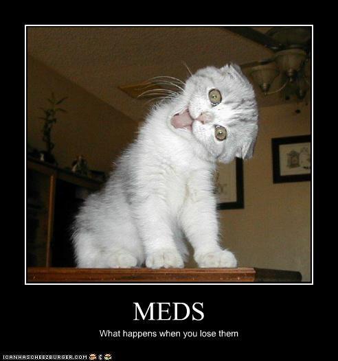 best of the week,caption,captioned,cat,crazy,Hall of Fame,happens,lose,meds,result,what