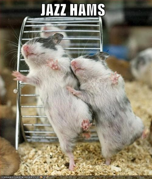 dancing,hamster,jazz,Music,rodents