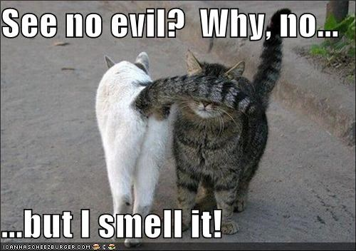 See no evil?  Why, no...  ...but I smell it!