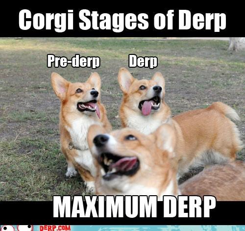 Teh Corgi Stages of Derp