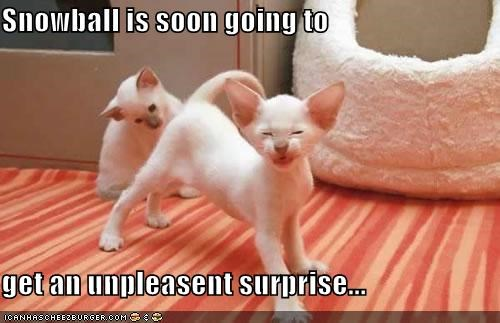 Snowball is soon going to   get an unpleasent surprise...