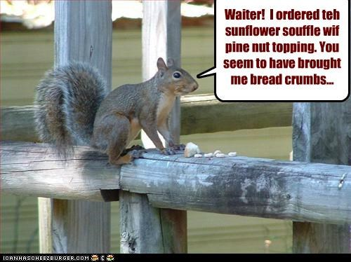 Waiter!  I ordered teh sunflower souffle wif pine nut topping. You seem to have brought me bread crumbs...