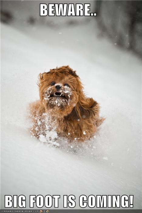 big foot,outdoors,run for your life,running,snow,whatbreed,winter
