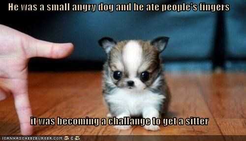 He was a small angry dog and he ate people's fingers  it was becoming a challange to get a sitter