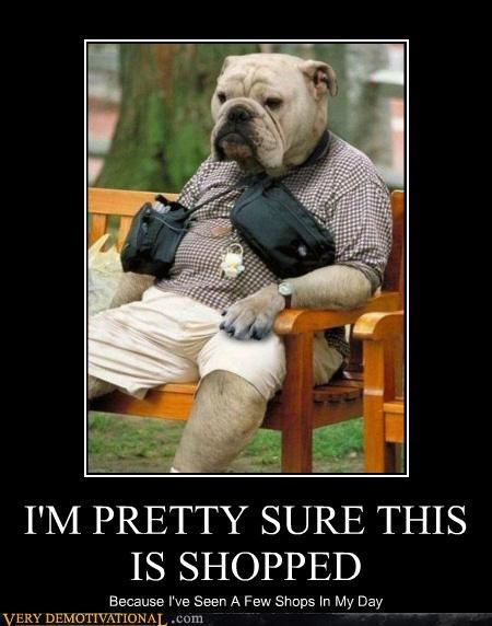 dogs,dog man,impossible,Mog,seems legit,shopped