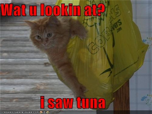 Wat u lookin at?  i saw tuna