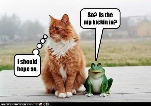 caption,captioned,cat,frog,hope,hoping,kicking in,nip,question,so,statue,tabby,working