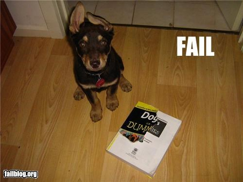 Dogs Training FAIL