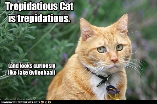 actors,animals,best of the week,Cats,Hall of Fame,I Can Has Cheezburger,jake gyllenhaal,look alikes,trepidatious
