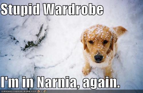 best of the week,golden retriever,narnia,outdoors,snow,wardrobe,winter