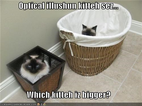 bigger,caption,captioned,cat,Cats,illusion,optical illusion,perspective,question,trick,which