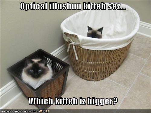 Optical illushun kitteh sez...
