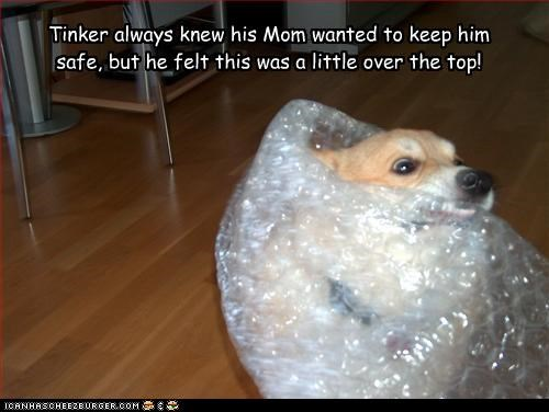 Tinker always knew his Mom wanted to keep him safe, but he felt this was a little over the top!