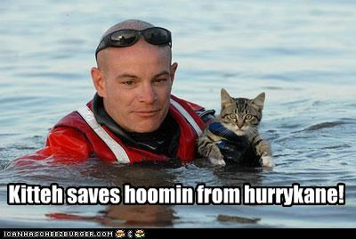 Kitteh saves hoomin from hurrykane!