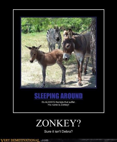 debra,donkey,hilarious,zebra