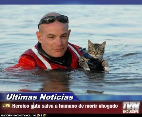 Ultimas Noticias - Heroico gato salva a humano de morir ahogado