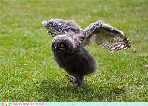 haters gonna hate,Owl,owlet,snowy owl,snowy owlet,squee spree,strut,swagger