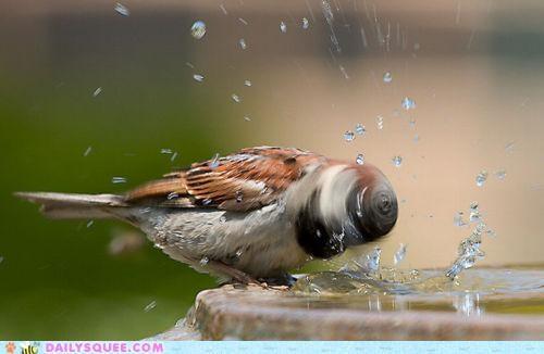 acting like animals,bird,drill,drillbit,drilling,head,high speed,shaking,spinning