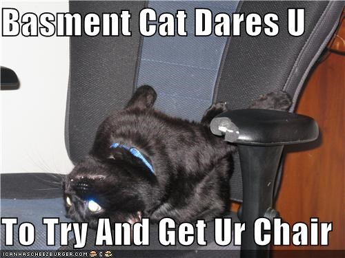 Basment Cat Dares U  To Try And Get Ur Chair