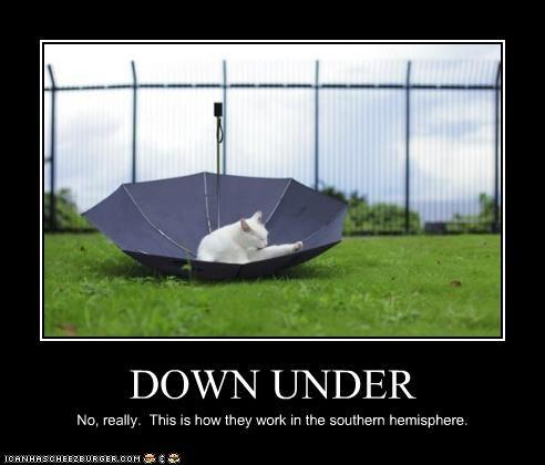 animals,australia,Cats,down under,I Can Has Cheezburger,umbrellas,upside down