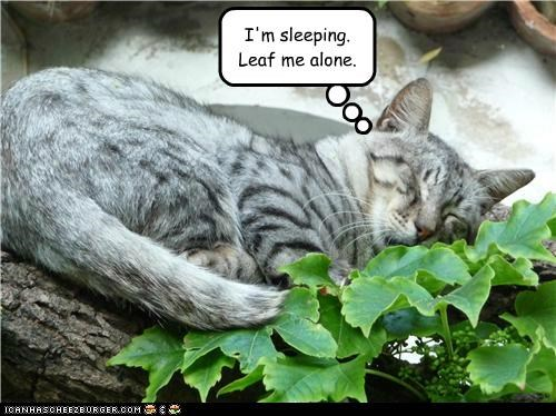 I'm sleeping.  Leaf me alone.