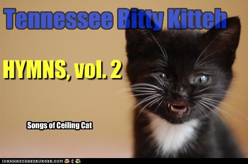 Tennessee Bitty Kitteh