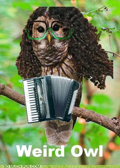 He Accordionly Comes Out at Night