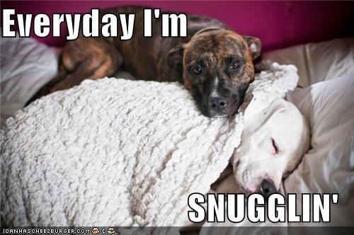 best of the week,cuddle,friends,friendship,love,pit bull,pitbull,snuggling,sweet,sweet dog