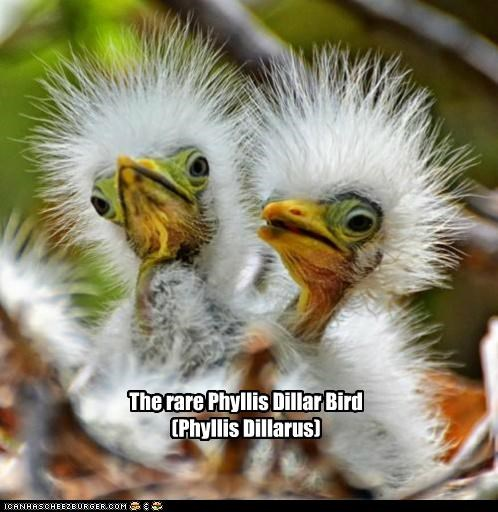 animals,birds,hair,I Can Has Cheezburger,look alikes,phyllis diller,species