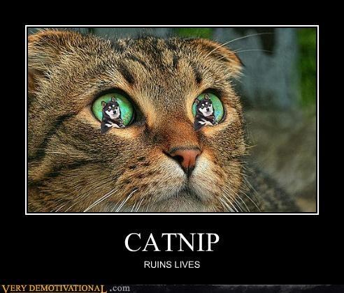 animals,cat nip,drugs,hilarious,lives,ruined