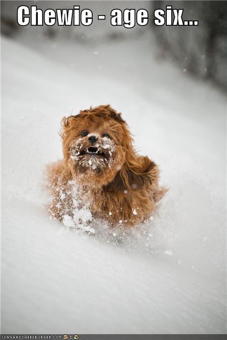 Chewie - age six...