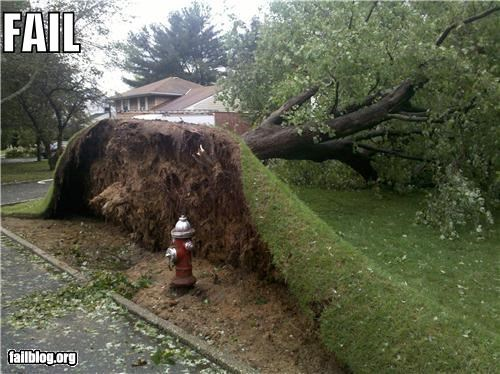 failboat,g rated,hurricane irene,strong,trees