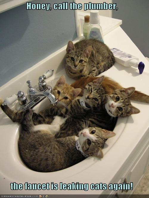 Honey, call the plumber,  the faucet is leaking cats again!
